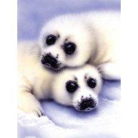 PJS40-–-Seal-&-Pup