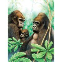 PJS41---Gorillas