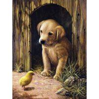 PJS50 – Labrador Puppy