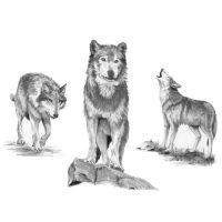 SKBNL2 – Wolves