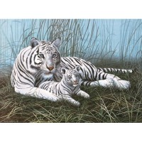 paint-by-numbers-jun-lge-white-tigers-in-the-mist