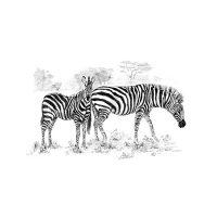 SKBNL5 - Zebras