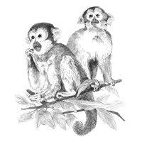 Set-schite,-Royal-Langnickel,-17-–-Monkeys