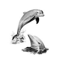 Set schite, Royal Langnickel, 19 - Dolphins