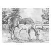 Set schite Royal and Langnickel 8 – Horse & Colt