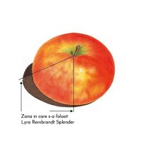 Creion incolor LYRA SPLENDER REMBRANDT pentru efect fotorealistic